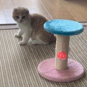 子猫のくりんちゃん、ドキドキのワクチン接種
