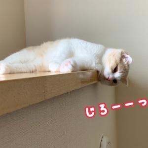 【YouTube更新】子猫の寝床事情。高みから飼い主の寝顔を観察している・・?