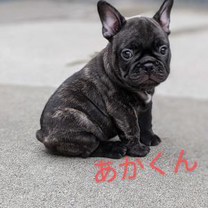 ★ちびっ子紹介★