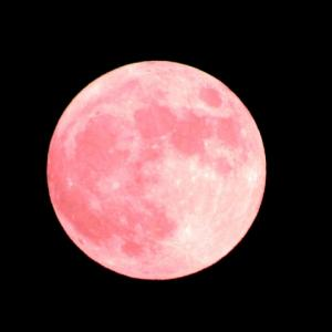 今日は「赤い月」の日で、ストロベリームーンの日