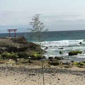 白浜神社 白浜海岸   Shirahama Shrine   Shirahama Beach
