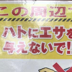「鳩にエサをやらないで」という張り紙  There was a poster saying don't feed pigeons