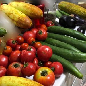 夏野菜ラッシュ 採れすぎて困った   We harvested lots of vegetables.