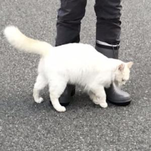 やたらなつくネコ  伊豆の家   a friendly cat in Izu