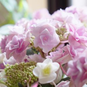 紫陽花の鉢植えは室内で育てられる?水やりや置き場所を間違いないで!