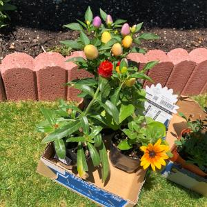 畑に花と野菜増やしました🌼