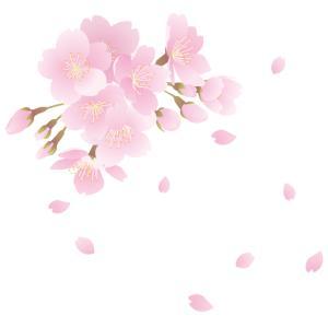 枯れ木に花が咲いちゃった!