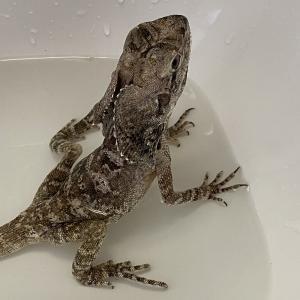 温浴と環境改善