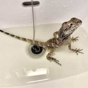 温浴とサプリメント