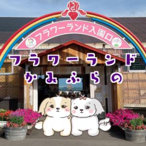 「フラワーランドかみふらの」【ファーム富田から15分一緒に観光がおすすめです】