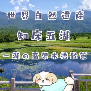 知床五湖「高架木道」で絶景ウォーキング【2020年夏の風景】