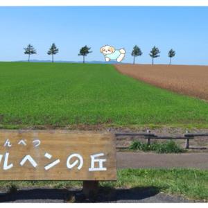 【メルヘンの丘女満別】美瑛の風景と比較すると「小さな丘」にガッカリ