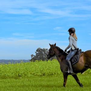 発達障害の息子が始めた乗馬。ホースセラピーの効果はすごいと実感