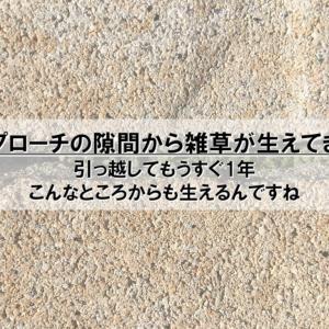 【雑記】アプローチの隙間から雑草が生えてきた