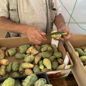 夏はモロッコでウチワサボテンの実を食べよう!El Karmouss El Hindi