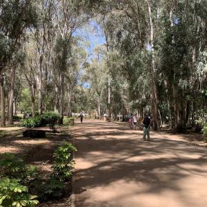 【ラバト観光】子連れにオススメの場所 Urban Forest Ibn Sina Hilton<公園>