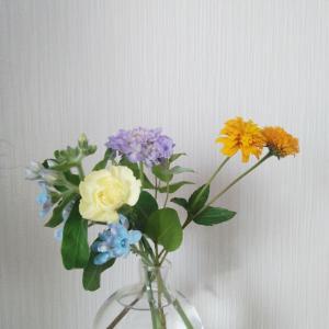 新しいお花。