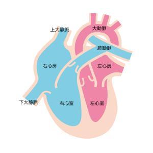 心臓カテーテル検査でわかること