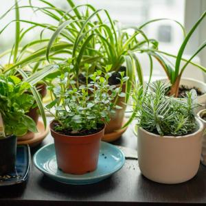 【ハーブ栽培レポ】初心者にも育てやすいハーブとその栽培方法