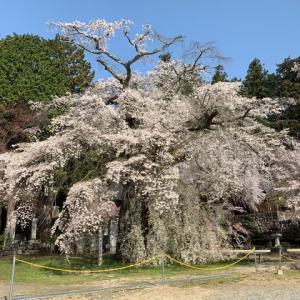高森町・瑠璃寺の桜