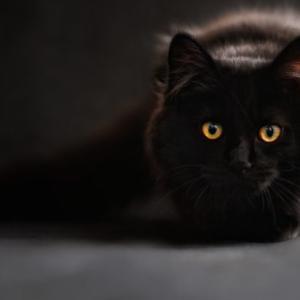 一日一教養 5分で読める『吾輩は猫である』