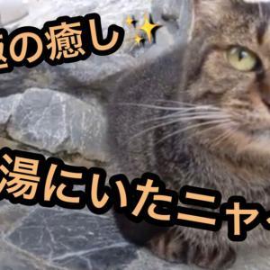 [究極の癒し] 足湯にいたニャー [猫]