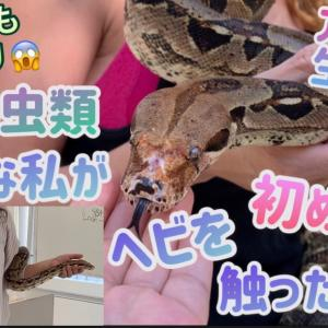 初めてヘビを抱えた日自分の中の何かが変わった✨