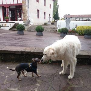 Ainhoa とEspelette〜バスク地方の村へ