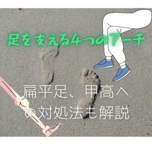 足を支える4つのアーチ【扁平足、甲高の原因も解説】