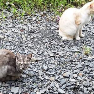 加圧シャツ 猫背矯正 ※猫のような暮らしをしたいが猫背は×××