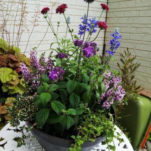 初夏の寄せ植えを作りました