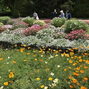 京都府立植物園 -おじおば下道の旅-