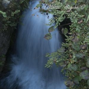 名もなき左岸の滝