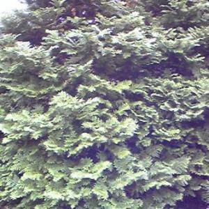 輪島塗~档の木