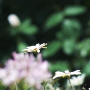 ꧁Locophotography꧂