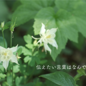 【花からの伝言】7月1日。今日のメッセージ