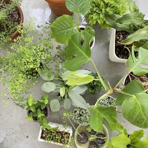 観葉植物と暮らす。