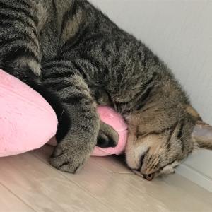 一人暮らしで猫を飼う~猫を見つける