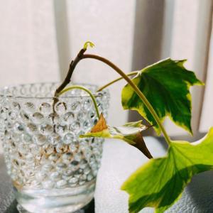 枯らしストのわたしが観葉植物を愛したら。