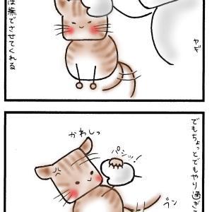 動きが男前なネコと、臆病なネコ