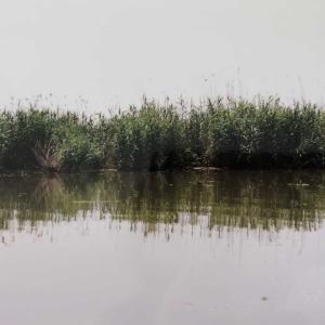 アンザリ湿原を疾走する