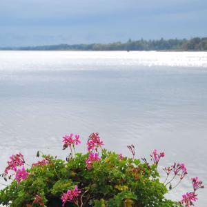 大雨のバラトン湖