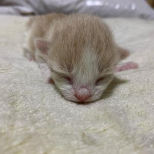 子猫成長日記♪