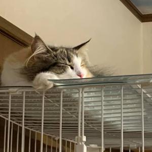 睡眠時間♪