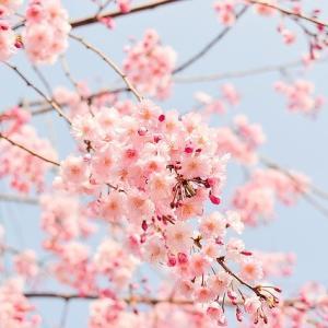 春はメンタルが不安定になりやすい?うつっぽくならないための予防法