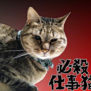 必殺仕事猫