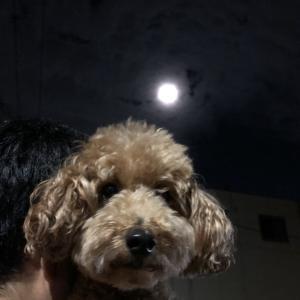 お月見 息子が子供の頃の望遠鏡でうさぎが見えた♡