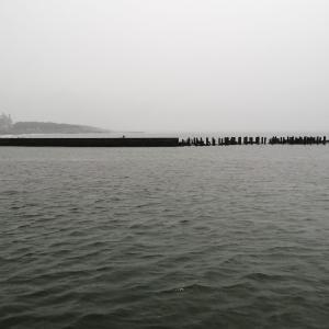 【釣果報告】相模川河口ではしゃぐ魚影の正体とは!?20/06/13