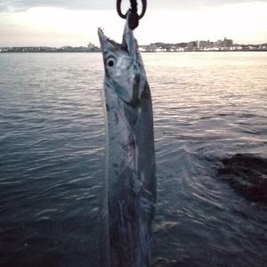 【釣行記】江ノ島に怪魚現る。お盆のホラー。20/08/13