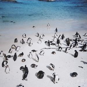南半球のペンギン